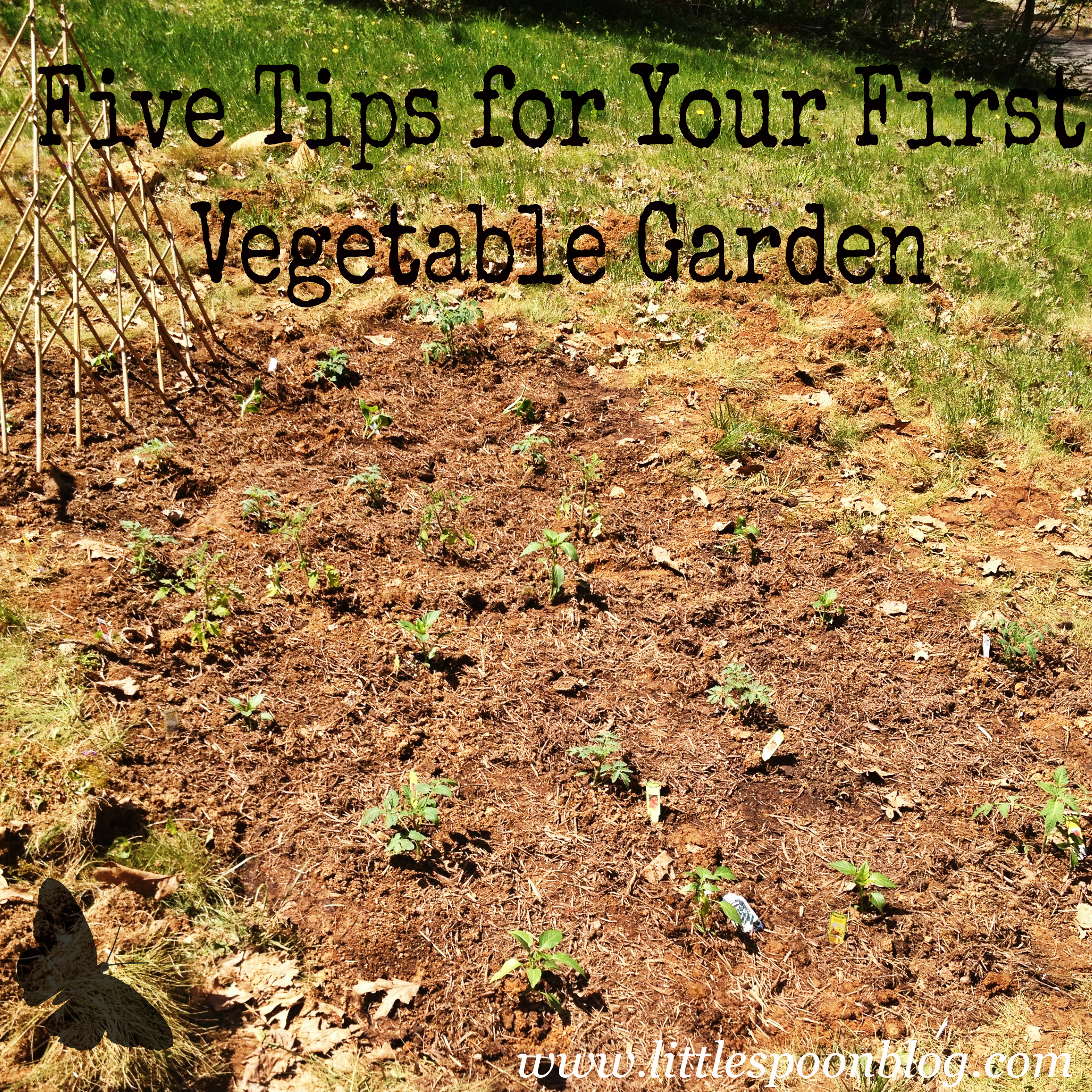 Creating Our First Vegetable Garden Advice Please: Five Tips For Starting A Vegetable Garden