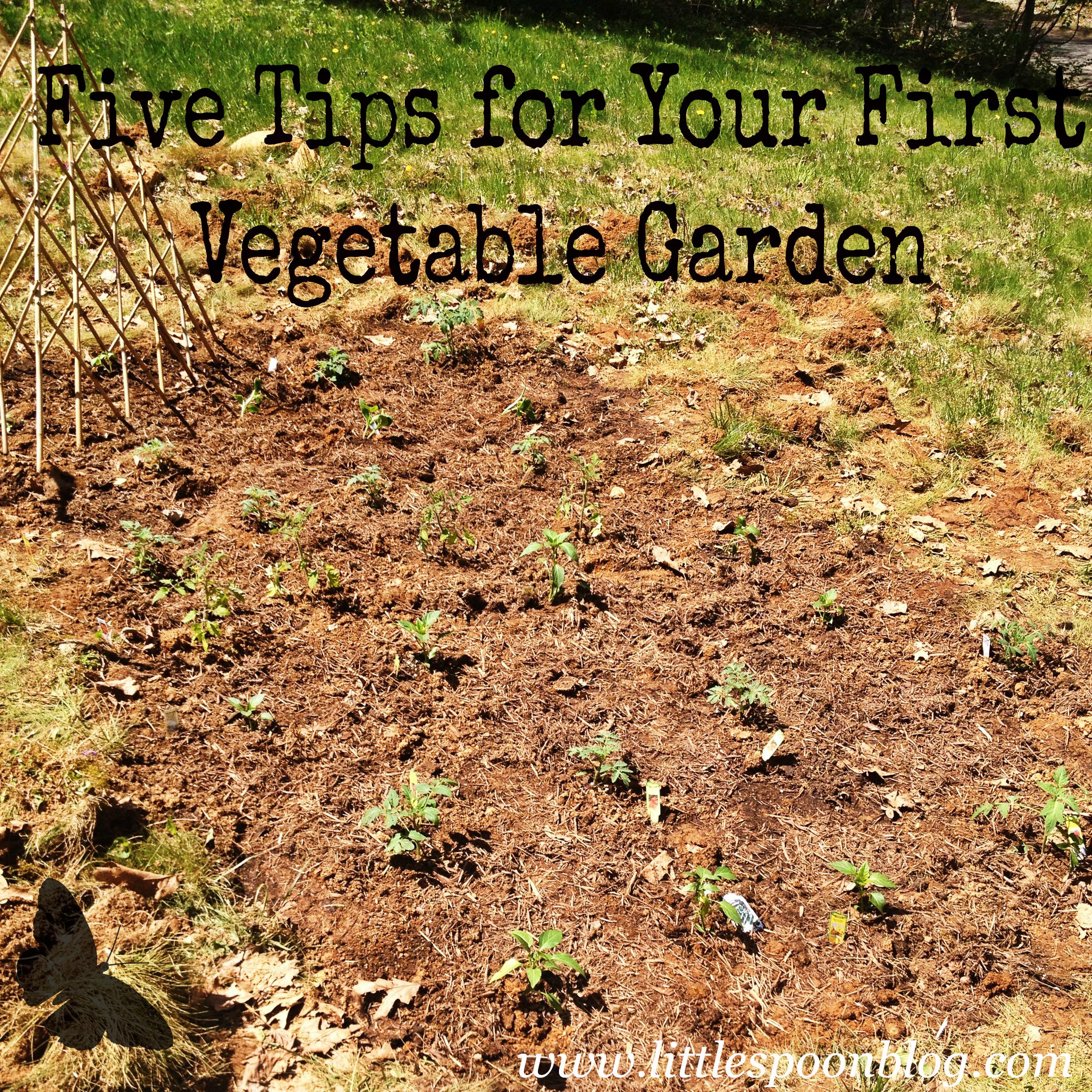 Five Tips For Starting a Vegetable Garden | little spoon blog